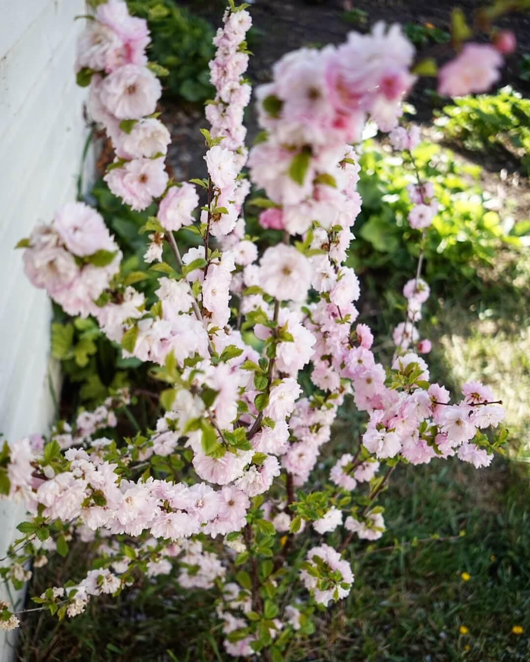 blooming flowers great gardening plants