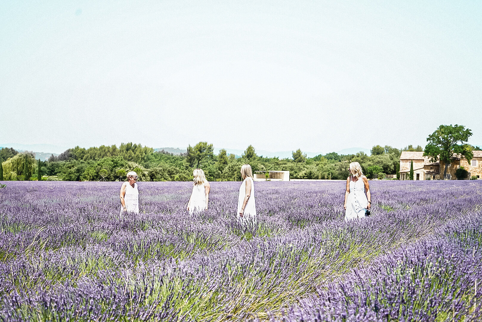 Instagram help lavender fields of provence