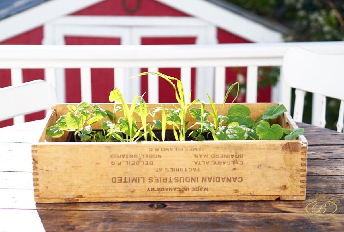starter garden from seeds