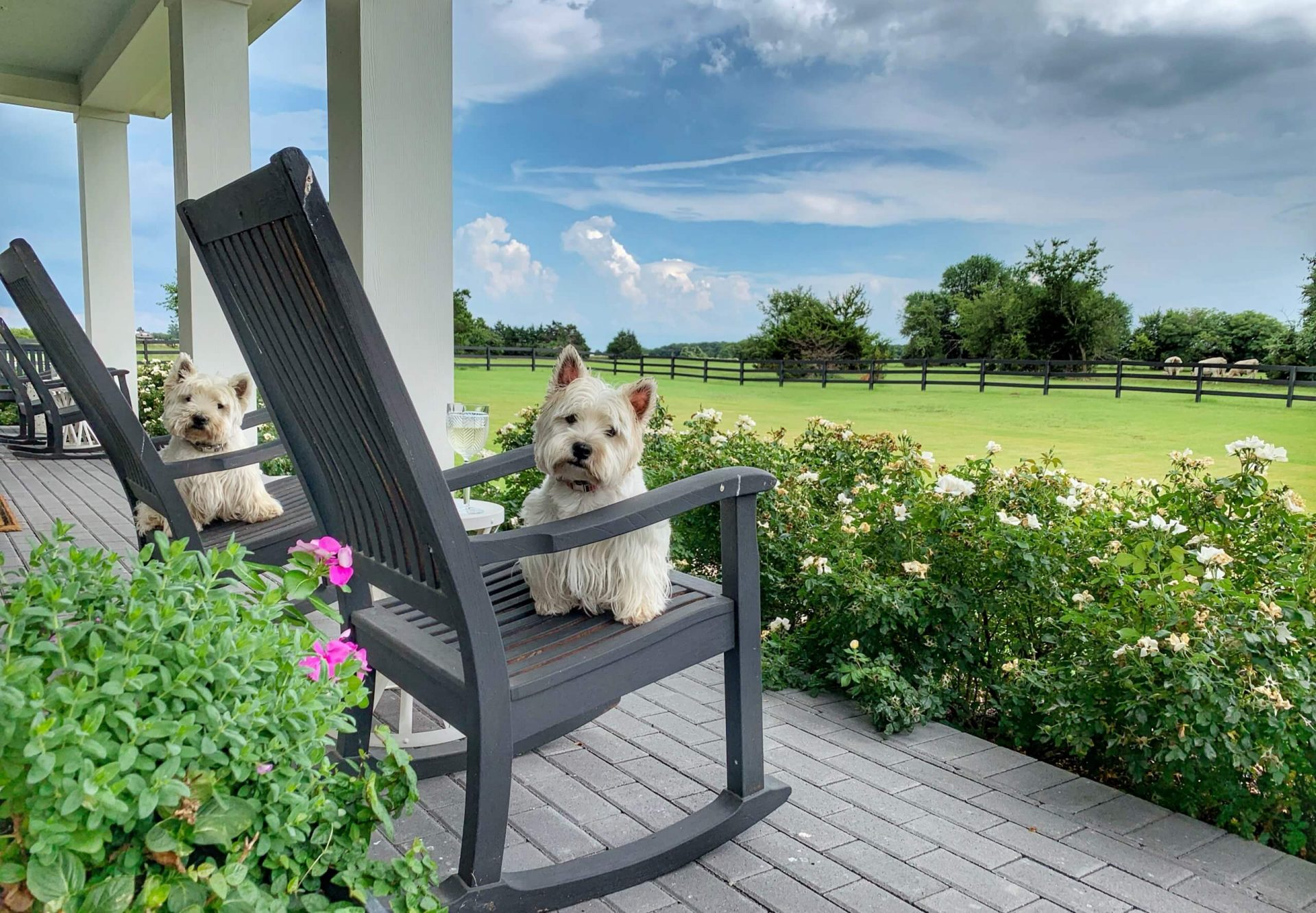 Thistle Hill Ranch Front Deck rocking chairs with pups