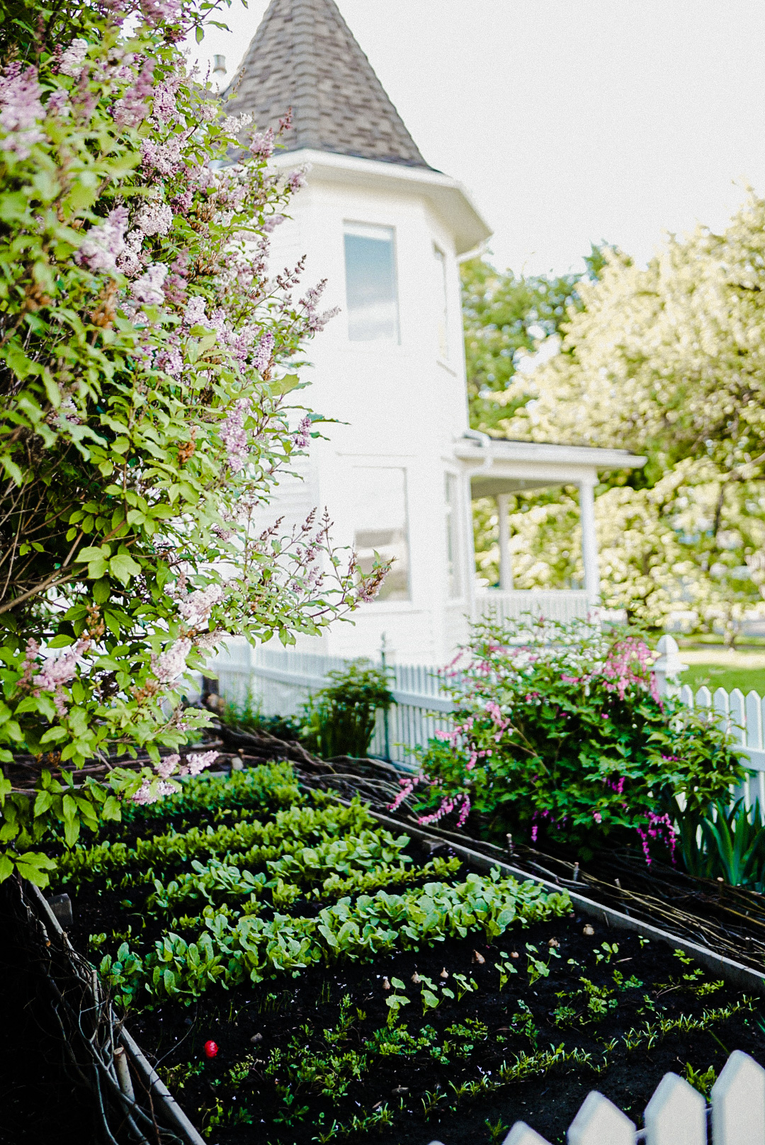 secret woven willow garden hidden by lilac bushes